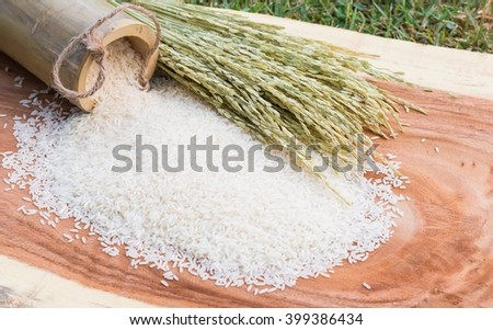 rice and paddy rice on wood table / Image Select focus and blur - stock photo
