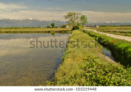 Rice fields with water and cloudy blue sky - stock photo
