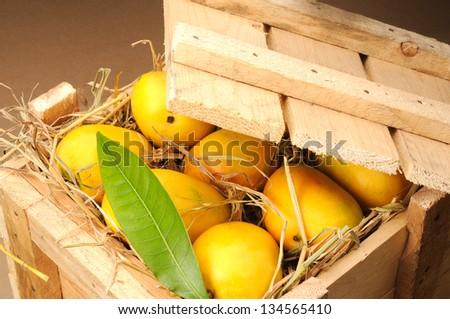 ripe mango - stock photo