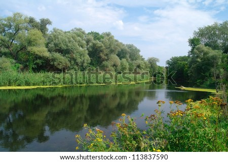 River and forest. Nature composition. - stock photo