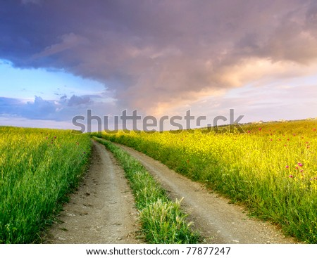 Road on green meadow during sundown. Composition of the nature