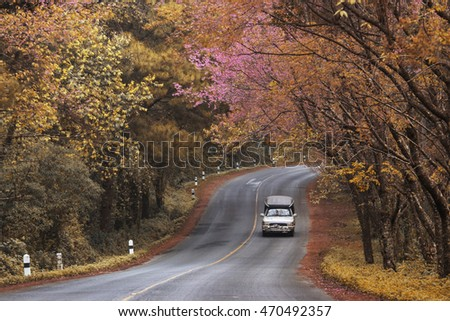 Romantic Road autumn springtime Leaves change color Popular travel tourist Beautiful at Doi Ang Khang ,Chiang Mai , Thailand