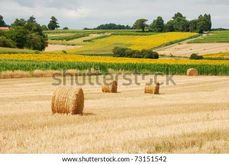 Round straw bales in harvested fields - stock photo