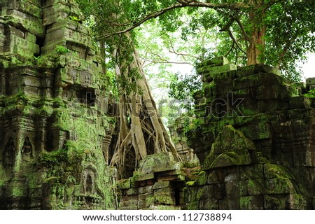 Ruin of Ta Prohm Temple, Cambodia