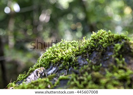 running mosses in selective focus with green bokeh background
