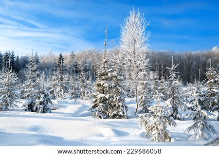 rural  winter landscape with the forest  and blue sky - stock photo