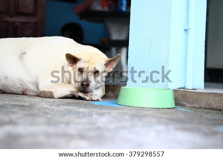 stock-photo--sad-dog-in-thailand-fat-dog-sleep-in-sadness-and-despair-sad-dog-because-it-s-very-fat-so-the-379298557.jpg
