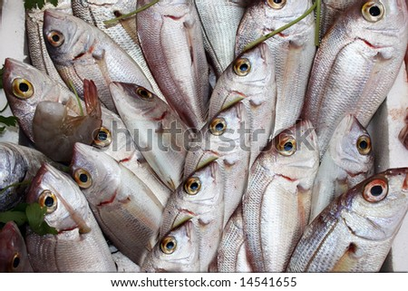 Sales of fresh fish on the market.