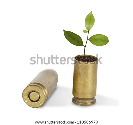 Sapling growing from shell - stock photo