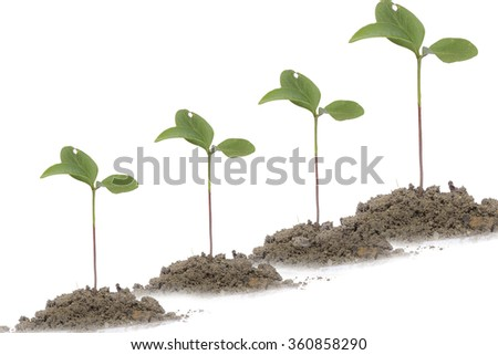 4 Saplings on white background