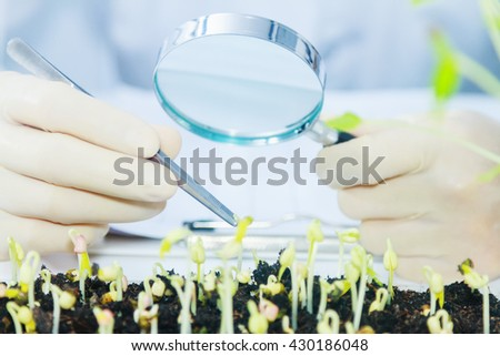 (SCIENCE) Scientists working women took the sprouts are beginning to experiment or for breeding sprouts a clean and chemical-free,science content, Film effect. - stock photo