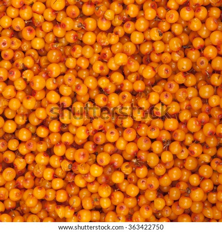 sea-buckthorn, background