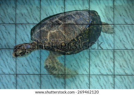 """sea turtle"" Mural. The tile painting concept - stock photo"