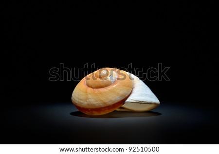 seashell isolated on black background - stock photo