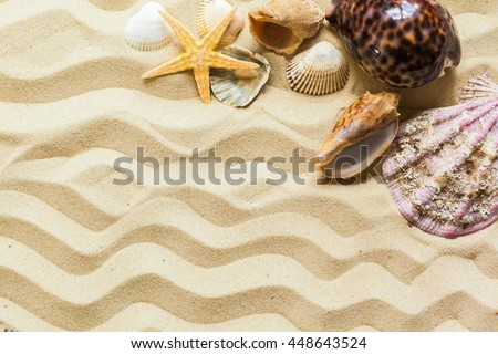 Seashells on the beach sand