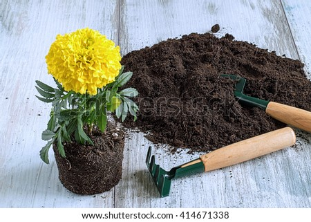 Seedling of flowers, soil, shovel and rake on a light wooden background.