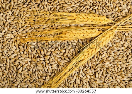 seeds and barley grains