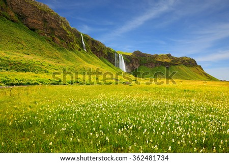 Seljalandsfoss waterfall and picturesque flowering fields and streams. Iceland in July. Warm summer day - stock photo