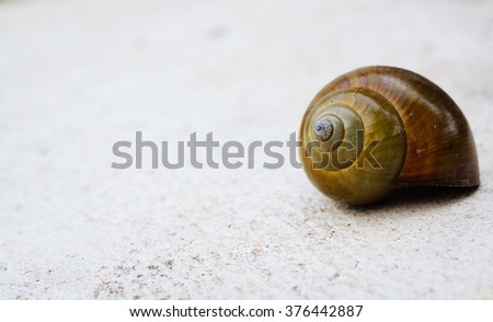Shell on background