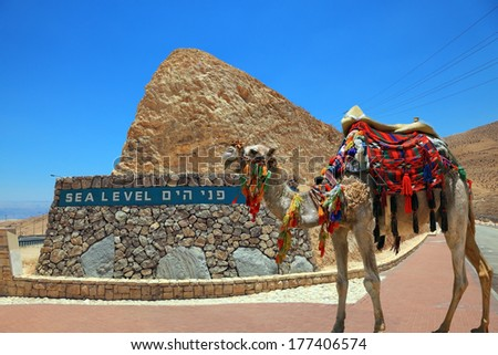 """Ship"" of the desert. Brightly decorated camel on the highway that runs in the Dead Sea Valley. On the side of a highway pointer sea level - stock photo"