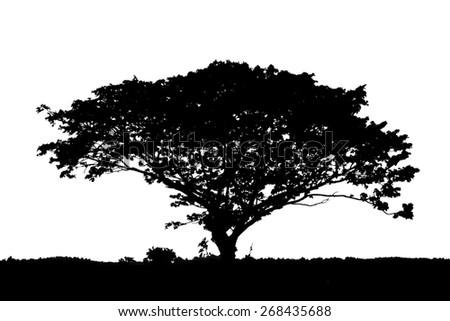 silhouette of tree on white background - stock photo