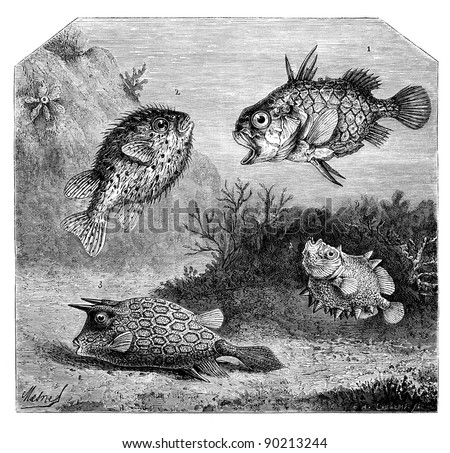 1. Single center in Japan. - 2. Diodon Orb or thorny. - 3. Ostracion has horns. - 4. Oreosome conifer. - Drawing Mesnel, vintage engraved illustration. Magasin Pittoresque 1875. - stock photo