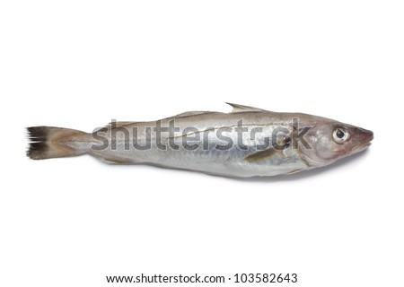 Single fresh whiting on white background