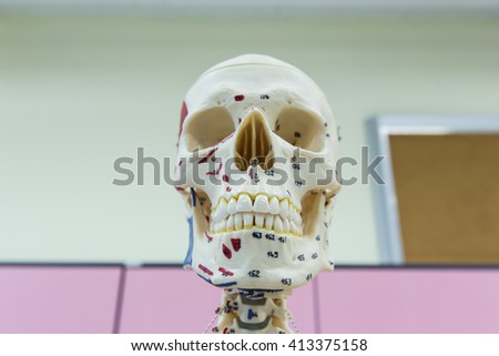 Skull and skeleton is resin in laboratory - stock photo