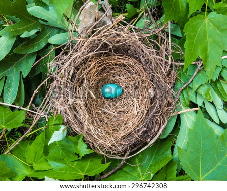 Small blue robins egg in nest among leaves