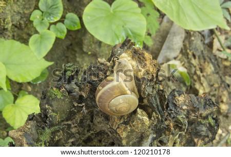 Snail at morning - stock photo