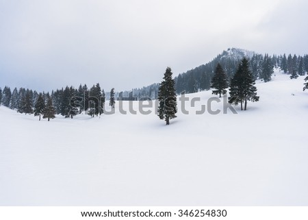 Snow-covered winter mountain landscape with pine-forest - stock photo