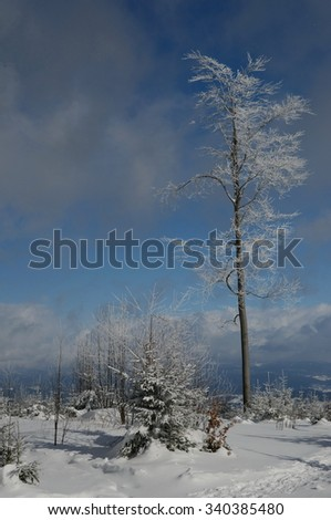 snowy forest with footprints and a beautiful view into the valley - stock photo