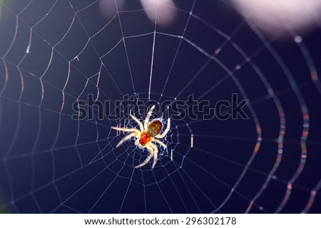 Spider on the web against sun