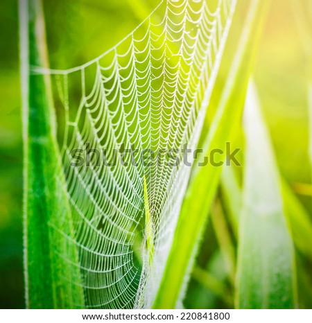 spider web or cobweb with water drops after rain against green  - stock photo
