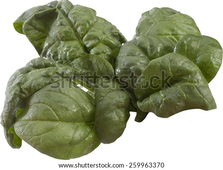 spinach leaves - stock photo