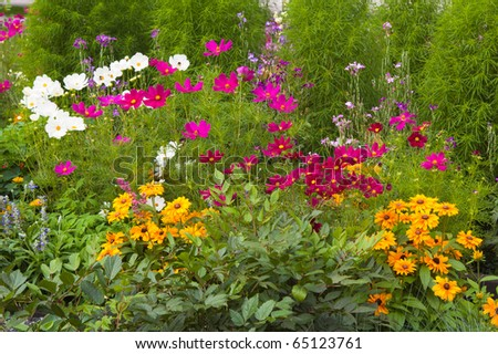 Spring flowers in a garden - stock photo