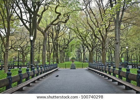 """Spring Sycamore Trees"" An early Spring view of the Central Park in The Mall area. - stock photo"