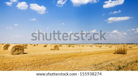 stack the straw lying on an agricultural field after cleaning of cereals - stock photo