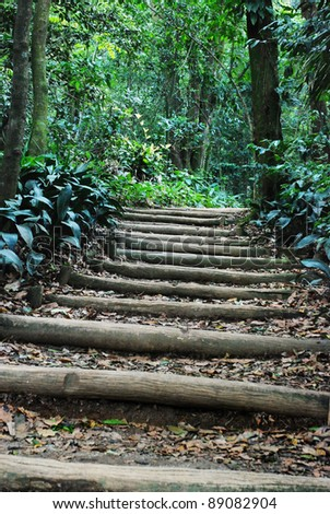 stairs into a forest