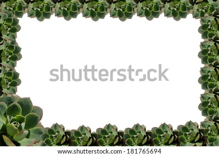 succulent plant frame  isolated on white background