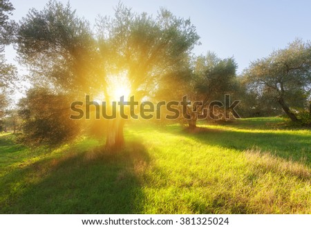 Summer garden and morning light - stock photo