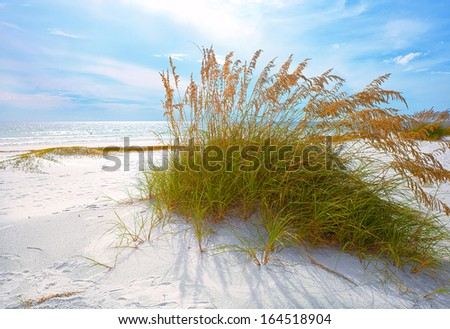 Sea grass stock photos images pictures shutterstock for Seagrass for landscaping