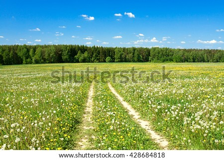 summer landscape with the field and  blue sky - stock photo