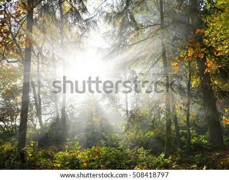 Sun shining through trees in a woods, sunrise in autumn forest.