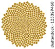 Sunflower Seeds - Golden Ratio / Golden Spiral  /  Fibonacci spiral, golden cut, Pi - stock photo