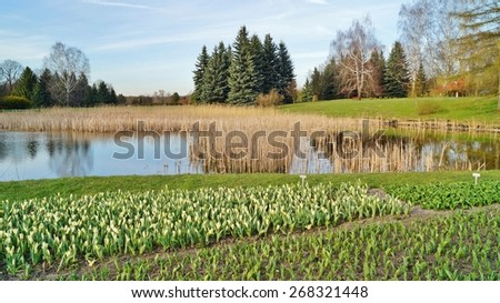 Sunny afternoon in the botanic garden - stock photo