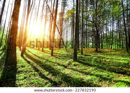 Sunny morning on the green spring forest - stock photo