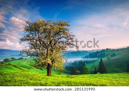 Sunrise in the Carpathian misty village with green hills and valleys in golden morning light - stock photo