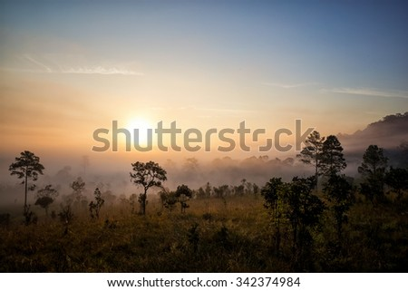 Sunrise in the forest landscape