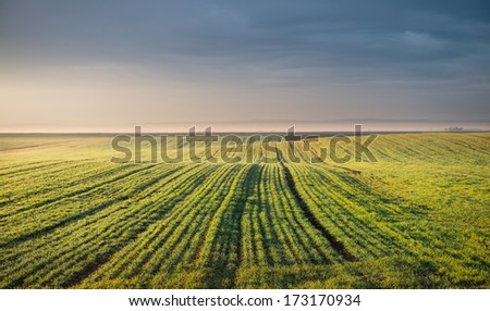 sunset over the wheat field - stock photo